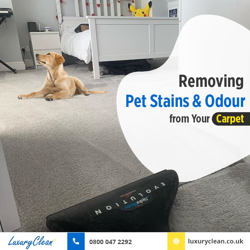 How to Remove Pet Stains and Odour from Your Carpet