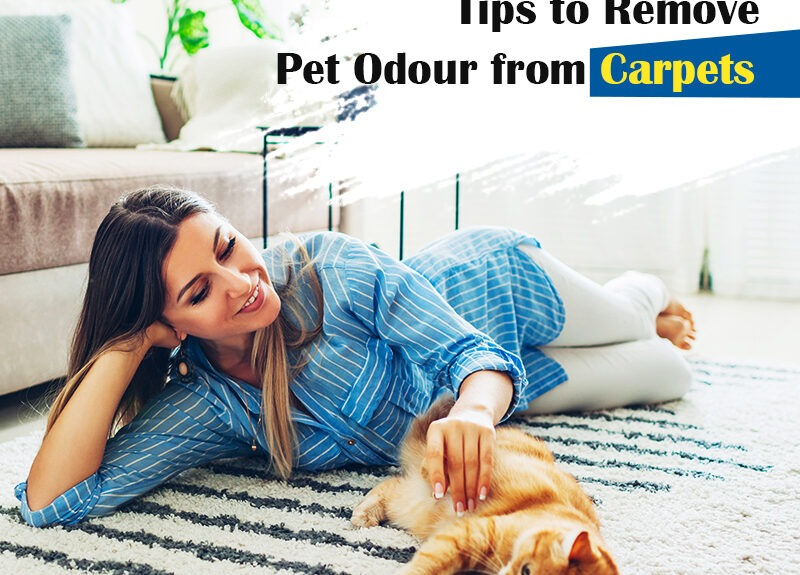 Want to Get Pet Odour out of Your Carpet? Take note of Vital Tips