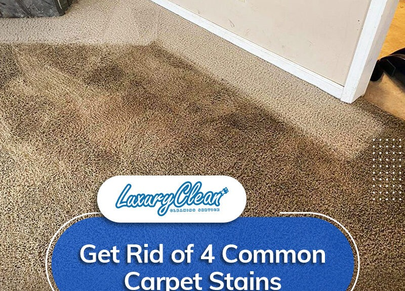 4 Common Types of Carpet Stains and How to Remove Them
